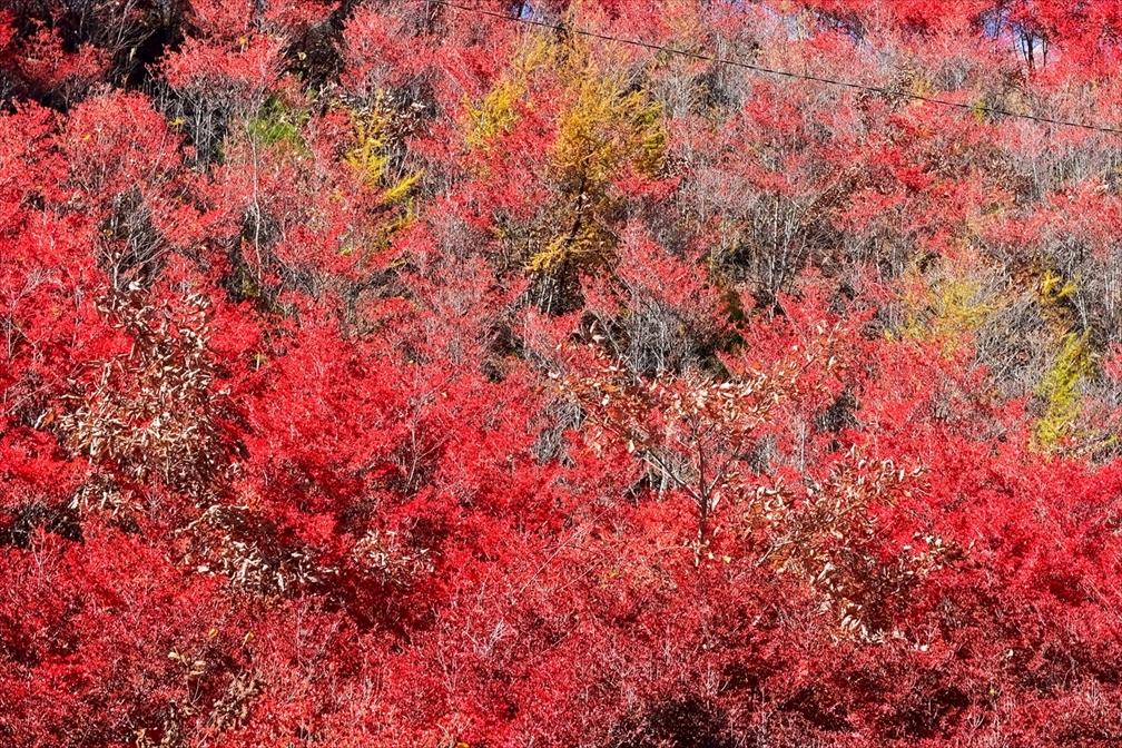 白樺湖・紅葉